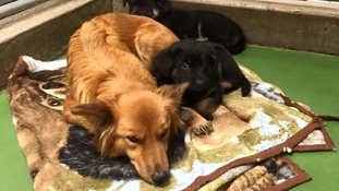 Dog breaks out of kennel to comfort crying puppies who were missing their mother