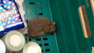 Shocked family finds live rat in Tesco online shopping order