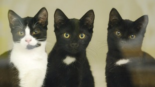Cat and her three kittens found dumped in bin bag by a member of the public in the middle of a road