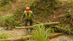 Hundreds of natural dams help prevent flooding on Levels