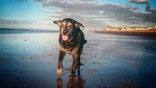 Jessie's last trip to Redcar beach goes viral