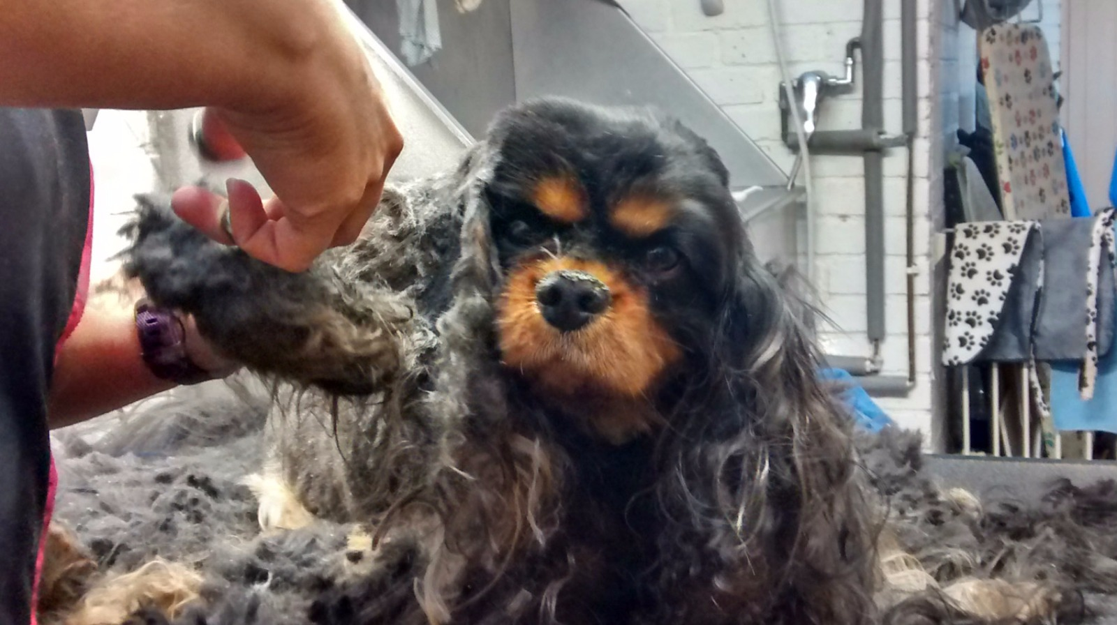 Rspca Warning Over The Importance Of Grooming As Dog Gets Much