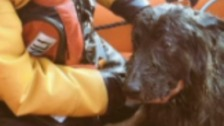 Dog called 'Storm' rescued at Sea