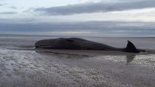 whalesvt