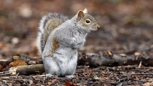 Warning issued after apparent spate of 'squirrel attacks'