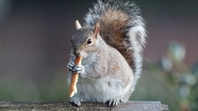 "Warning issued after spate of apparent ""squirrel attacks"""