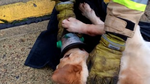 Fire crews carry special oxygen masks for pets
