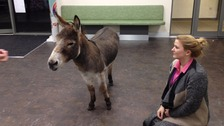 Watch: Why did the donkey go to a Wirral pharmacy? It was feeling a little horse