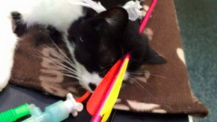 Cat shot by crossbow was 'millimetres from death'