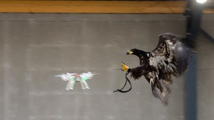 The new Flying Squad? Met Police considers using eagles to attack illegal drones