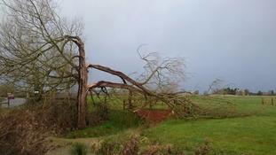 Tree has been split in half by Storm Imogen in Swindon