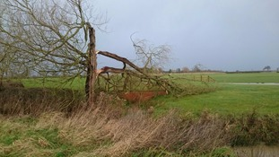 Tree damage caused by Storm Imogen