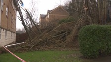 Trees fall on Bristol block of flats