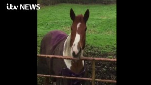 Horse confidently predicts triumph for Leicester City