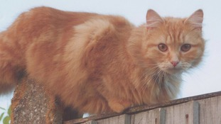 Police appeal after cat shot dead