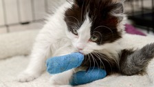 Kitten in intensive care after having paws cut off