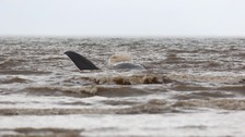 Seventh Whale found stranded off Norfolk coast