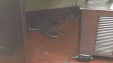 Man 'threw alligator through window of fast food diner'