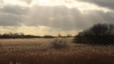 Wicken Fen in Cambridgeshire.
