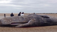 Two whales have washed up at Hunstanton in recent weeks.