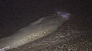 The dead creature is now thought to be a minke whale.