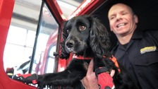 Raring to go - Archie the fire dog