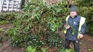 Phantom gardener mysteriously pruning plants without permission