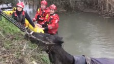 Horse rescued by fire crew after falling into stream