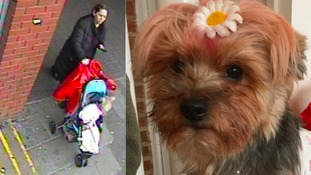 Woman sought in dog-napping after terrier dressed in pink stolen