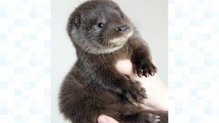 Immy the otter