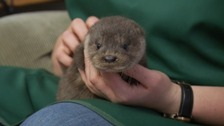 Immy the otter was flooded right out of her home.