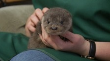 Baby otter rescued after her home is flooded
