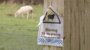 National Sheep Association and RSPCA have issued a joint plea for dog owners to act responsibly around sheep.