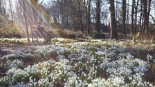 man sitting on bench in snowdrop field, prism of light streaming through behind him