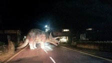 Dinosaur roadblock bemuses motorists