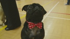 Puggy love to raise awareness of animal charities
