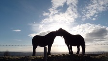 two horses in sihouette nuzzling each other, setting sun behind