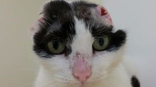 Timmy was found living in a bin shed surrounded by rubbish with horrendous ear tumours.