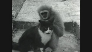 Have you ever seen a monkey cuddling a cat?