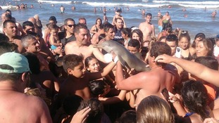 Endangered dolphin left to die after tourists haul it out of the ocean for photos