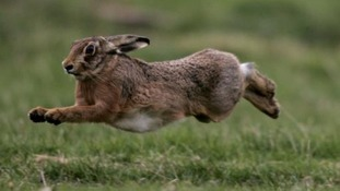 Lincolnshire Police tackle hare coursing
