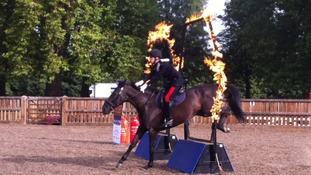 A horse jumps through a flaming hoop.