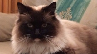 Cat Ykiyo's body was found by her owners in Croydon.