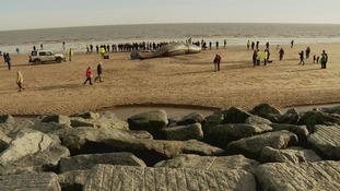Whale washed up on Lincolnshire coast at the beginning of month