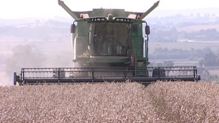 Wet summer weather affects harvest for many Midlands farmers