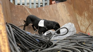 Jazz searches a skip for stolen metal.