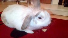 Roary the rabbit