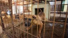 The dogs were kept in cramped, filthy cages