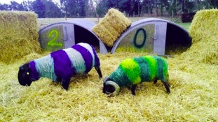 The football-themed sheep at last year's lambing weekend.