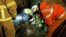 Firefighters rescue Zeb the horse from an old mine